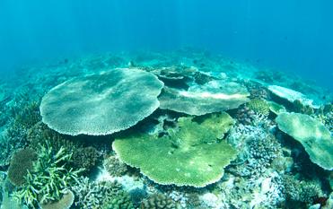 体験ダイビング サンゴゆたかな海